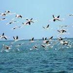 Chilika hosts over 1 million birds this winter: CDA Report
