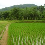 Centre to promote One District One Focus Product of agri and allied sector