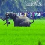 SC directs Odisha and five other states to respond to Centre on elephant corridor