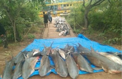Trawler with 250 sharks seized, 7 arrested by coast guard