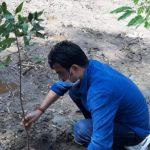 Tata Steel BSL plants 10,000 saplings in UP