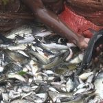 Tata Steel BSL supports villagers for pisiculture