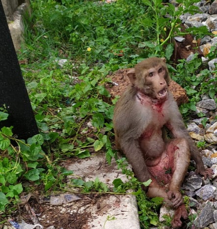 Railway Police ASI recues injured monkey from track
