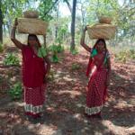 14 new Minor Forest Produce now under MSP scheme